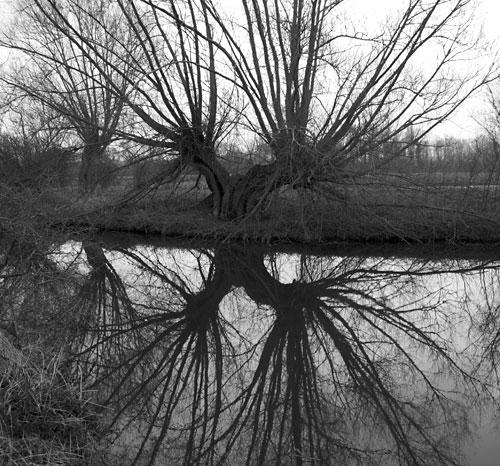 Grantchester tree